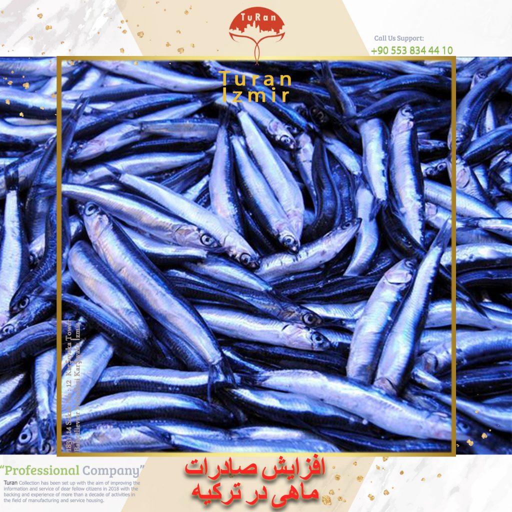 افزایش-صادرات-ماهی-خمسی-در-ترکیه