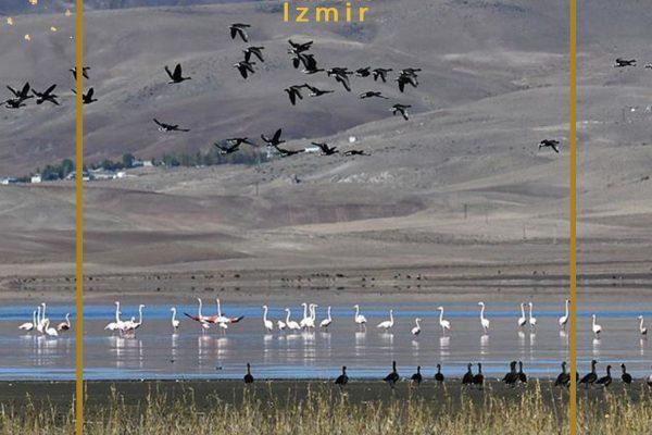 دریاچه ارچک میزبان صدها گونه پرنده مهاجر